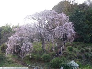Hachifuji